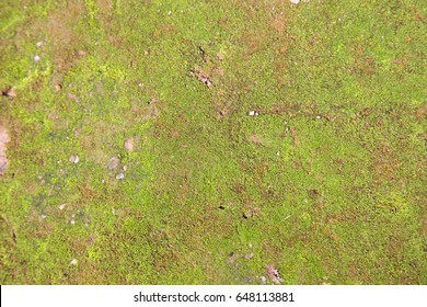Moss,texture and background