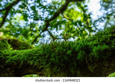 Mossy branch close up