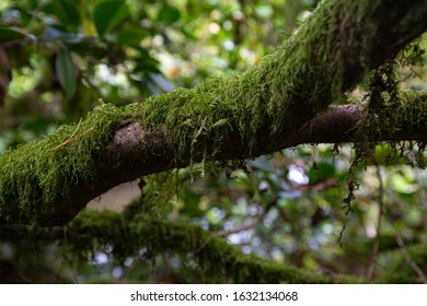 A mossy branch in the pacific northwest.
