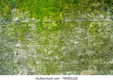 A mossy concrete wall texture with an imprint of a wooden formwork and a noticeable bulging seam.
