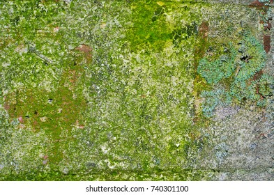 A mossy concrete wall texture with an orange-brown blotches and a big lichen on the right side.