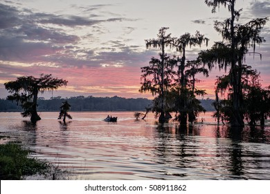 Mossy Cypress Trees Against Pink Sky at Sunset