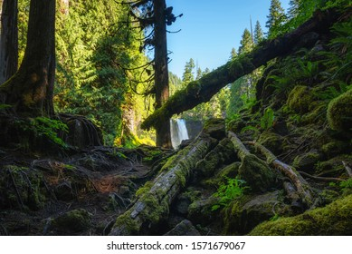 Mossy forest along McKenzie River in Willamette National Forest, Oregon