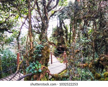 Mossy Forest in Brinchang, Cameron Highlands - Malaysia