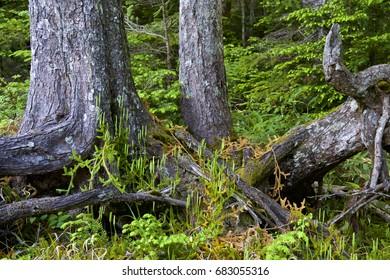 Mossy forest moss like a fairy tale
