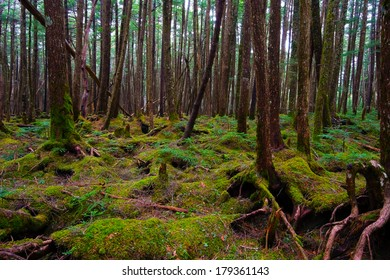 Mossy Forest of Mt.YATSUGATAKE, Nagano Prefecture/Japan, 2013/6/6.