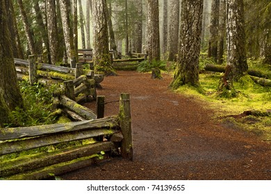 A mossy forest in a northern climate with trees and a walking path along a fence on a cloudy rainy day.