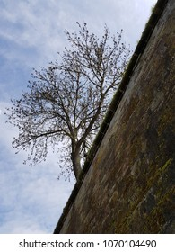 mossy fortress wall in saarlouis saarland germany from deep vertical perspective with beautiful tree on the hillside