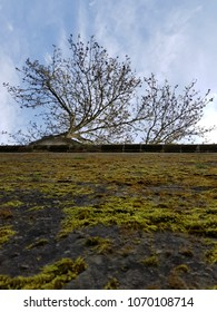 mossy fortress wall in saarlouis saarland germany from deep vertical perspective with beautiful tree on the hillside split