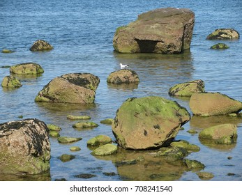 Mossy green rocks at the beach in Caumsett State Park in the village of LLoyd Harbor in Huntington, Long Island, New York.