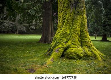 Mossy Green Tree Trunk in Park.