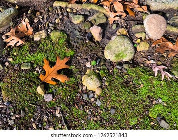 Mossy ground with dry brown leaves scattering and sunlight in Fall.