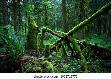 A mossy mess in a forest of green.