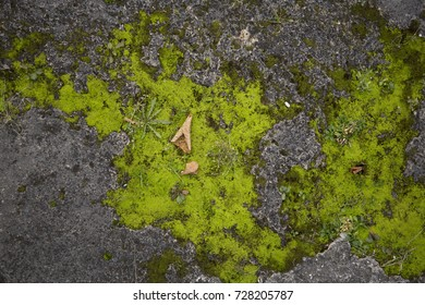 Mossy old rough stone surface texture