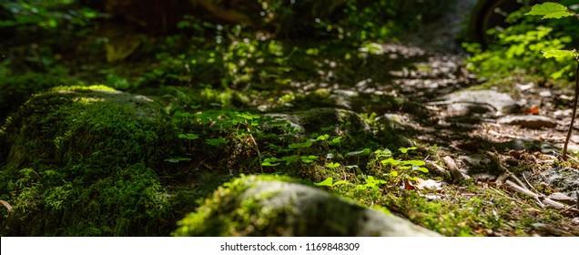 Mossy overgrowth stone close up