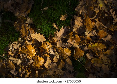 mossy stones and fallen brown oak leaves natural autumn background