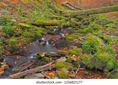 Mossy stones and felled trees in the Hulski stream. Bieszczady Mountains. Bieszczady National Park.