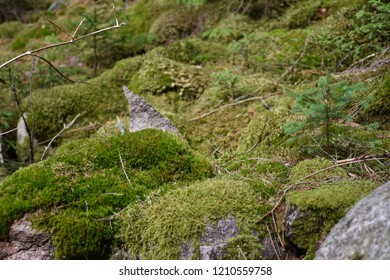 Mossy and stony green forest ground