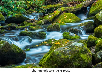 Mossy Stream in Great Smoky Mountains National Park