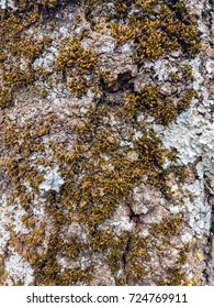 Mossy Tree Bark with Fungi