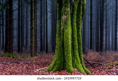 Mossy tree trunk in autumn forest. Forest mist tree moss. Green moss on tree trunk in forest mist. Misty forest tree trunk moss
