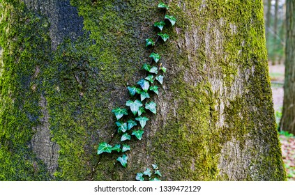 Mossy tree trunk leaves view. Moss on tree trunk background. Mossy tree trunk view. Mossy tree trunk scene