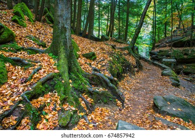 A Mossy Tree Trunk, Rocks And Roots Along A Hiking Trail In The Scenic Old Man's Cave State Park Of Central Ohio During Autumn, Hocking Hills Region, USA