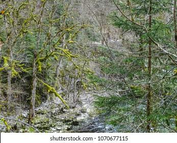 mossy trees near saut du doubs waterfall in the region of doubs switzerland