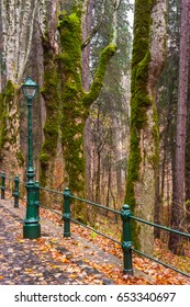 Mossy trees near stone paved street through forest. Old style metal street light and fence in the foreground.