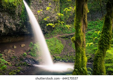 Mossy trees stand peacefully before a waterfall in the Columbia River Gorge.