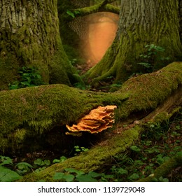 Mossy trees, tinder fungus, pink glow in mysterious fairytale forest