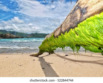 Mossy Trunk at the beach
