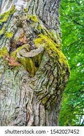 Mossy trunk of a mighty ancient oak tree in a summer forest. Old oak with bark covered with moss and lichen in a natural setting