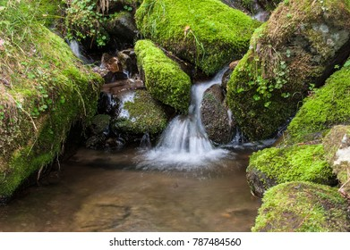 Mossy valley.Beautiful mountain stream with moss covered stone,