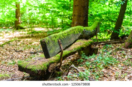 Mossy wooden bench in forest. Forest mossy bench. Forrest mossy bench. Mossy bench forest
