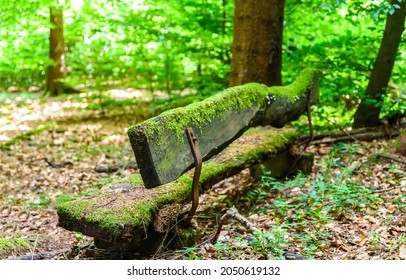 Mossy wooden bench in the forest. Bench in mossy forest. Mossy forest bench view
