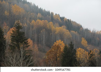 the most beautiful autumn photos.