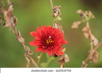 Hd Flower Download Images Stock Photos Vectors Shutterstock,Best Plants To Grow Indoors In Arizona