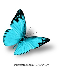 The most beautiful flying light blue butterfly, the lesser albatross in fancy color profile on white background with soft shadow