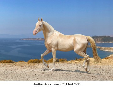 the most beautiful horse in the world, a horse is worth a million dollars,