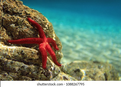 Most beautiful mediterranean sea star underwater photo