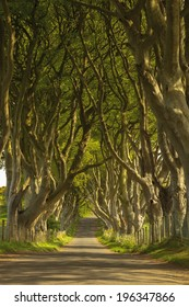 The most beautiful street in the world called The Dark Hedges, Northern Ireland.