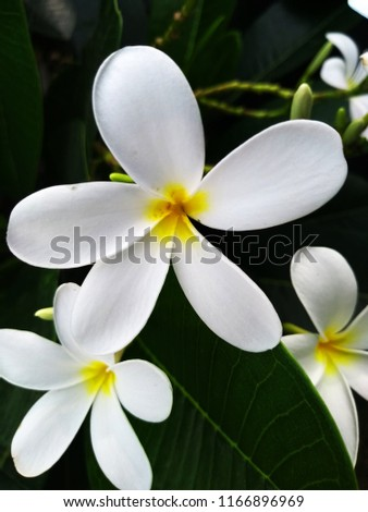 Most Beautiful White Flower Wallpaper Stock Photo Edit Now