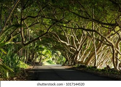 Most Beauty road at Big Island Hawaii