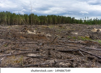 most illegal deforestation in Russia