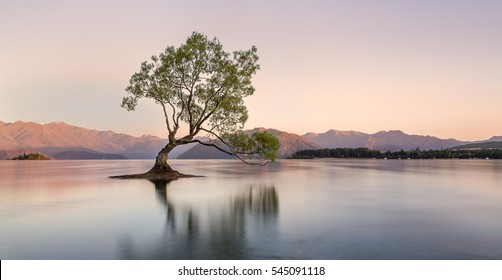 The most photographed tree in New Zealand, Lake Wanaka at sunrise.