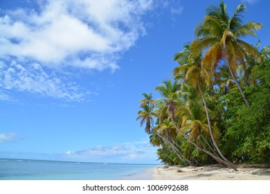 the most picturesque Palm trees in the caribbean at Pigeon Point, Tobago