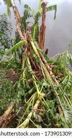 Most powerful cyclone, amphan cyclone damage, super cyclone Amphan badly damaged trees in our area,trees fallen during the cyclonic storm at Kolkata, West Bengal, India