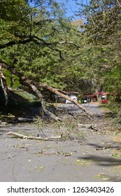 A mostly dead tree smashes down onto a narrow road completely blocking it with shattered branches and scattered debris