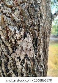 Moth camouflage by day in the forest